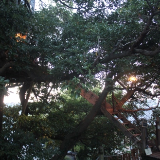 treehouse evening (1)